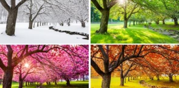 Quiz: What Seasonal Palette Am I?