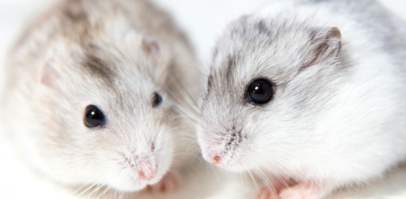 What Kind Of Hamster Are You?
