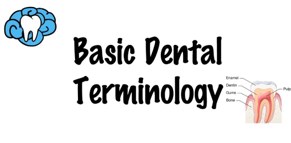 Tooth Identification Quiz: Dental Terminology Trivia!