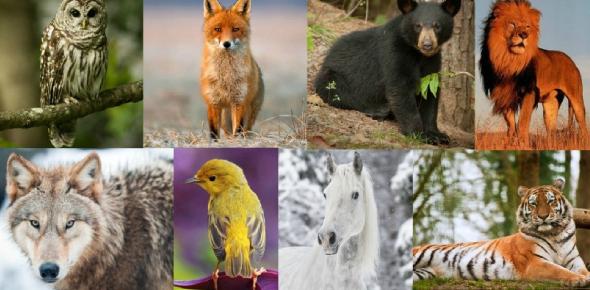 The Animal Personality: Quiz!