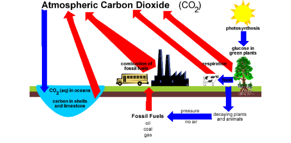 Carbon Cycle And Fossil Fuels: Quiz!