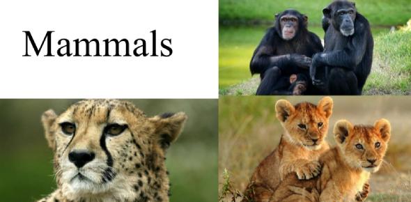Interesting Mammals Quiz Questions
