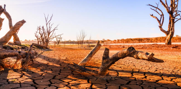 Climate Change Effects Quiz! Trivia