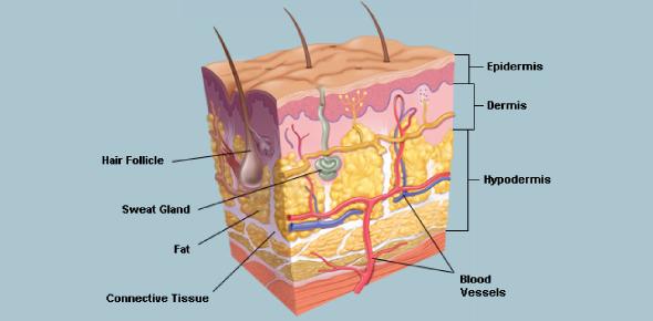 Skin: Rule Of Nines Test