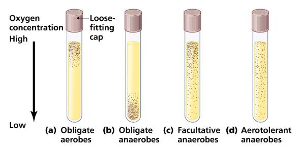 Microbiology: Anaerobic Bacteria Culture! Trivia Quiz