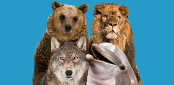What Animal Are You? Personality Quiz