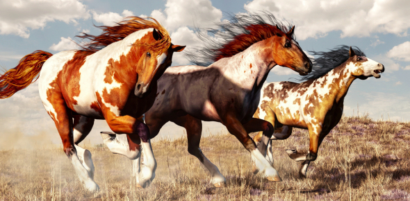 What Breed Of Horse You Are Quiz