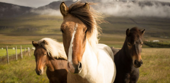 Quiz: How Much Do You Know About Horses?