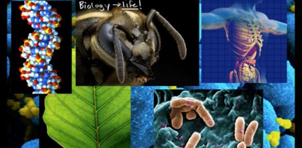 Easy Basic Biology Test
