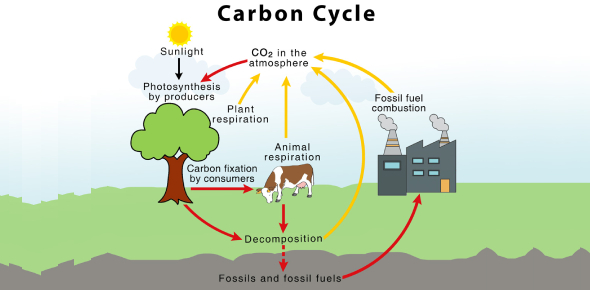 A Quiz About The Carbon Cycle