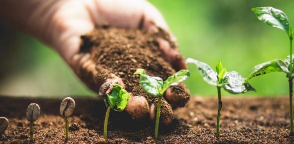 The Biology Behind Plants - Quiz
