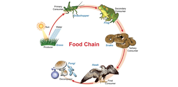Where Is Your Place In The Vore Food Chain?