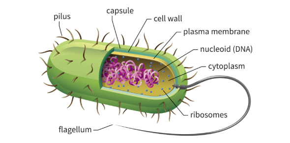 Biology Quiz: Cell Structure And Function