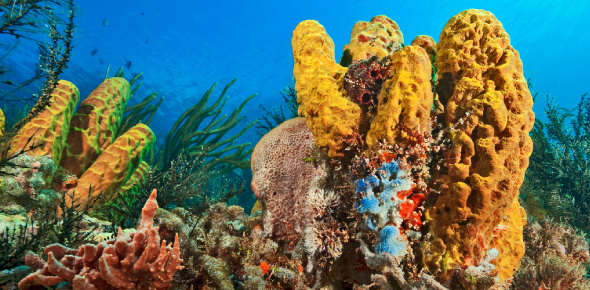 Phylum Porifera Quiz: Exam!