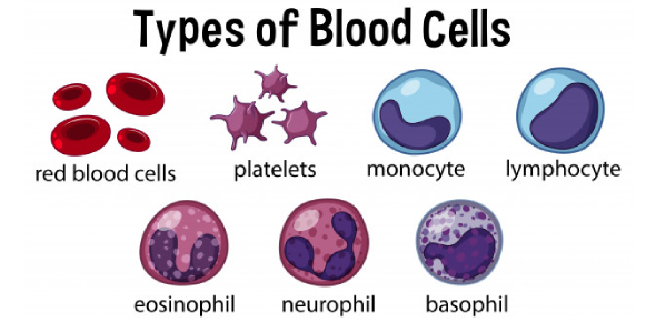 A Trivia Quiz On Types Of Blood Cells!