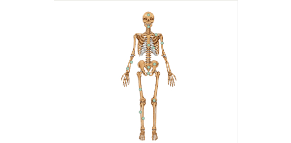 Identify The Human Body Skeleton Parts Quiz!