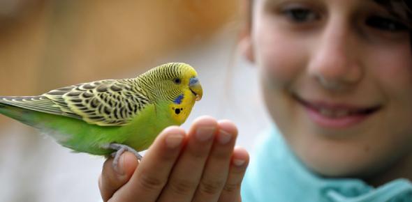 Name For My Pet Bird?