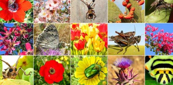 Limits And Biodiversity Quiz