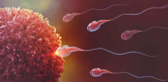 Bilaminar Embryo: Embryology Quiz
