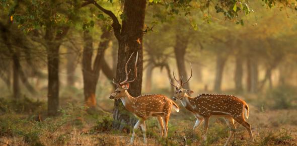 Wildlife Habitats Quiz: Trivia!
