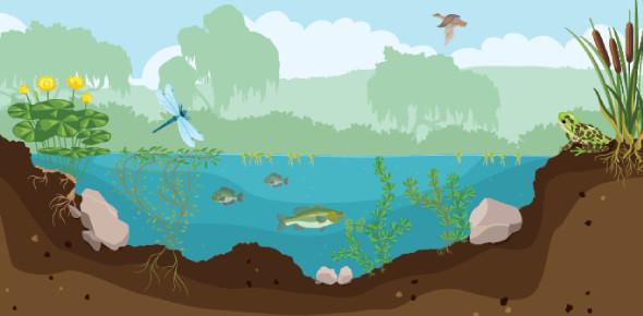 A Quiz On Pond Ecosystem! Trivia