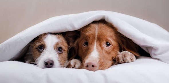 A Quiz On Pets: Trivia!