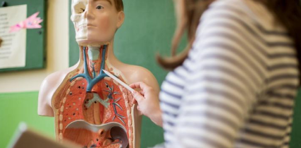 Wanna Learn Anatomy And Physiology? This Is A Quiz
