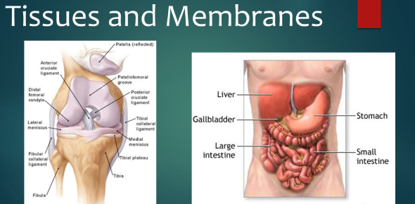 How Well You Know Tissues And Membranes? Trivia Quiz