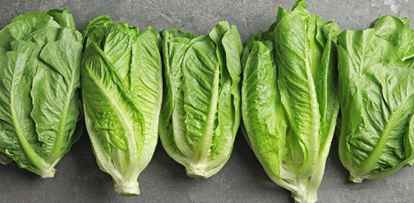How Aware Are You About Romaine Lettuce?
