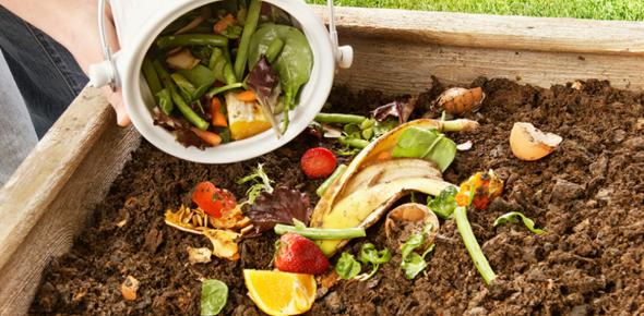 Composting Quiz