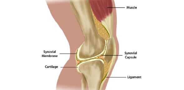 The Knee Joint Quiz
