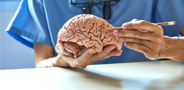 Quiz: Ultimate Facts About Brain! Trivia