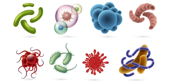 Microbiology- Bacteria And Virus MCQ Test