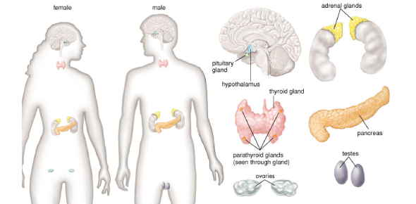 Questions About Our Organs And Glands You Should Know The Answers Of!