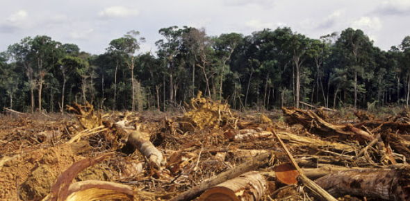 Deforestation: How Well You Know? Quiz