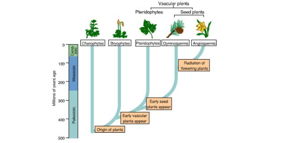 Evolution Unit Pre-assessment (Grade 7)
