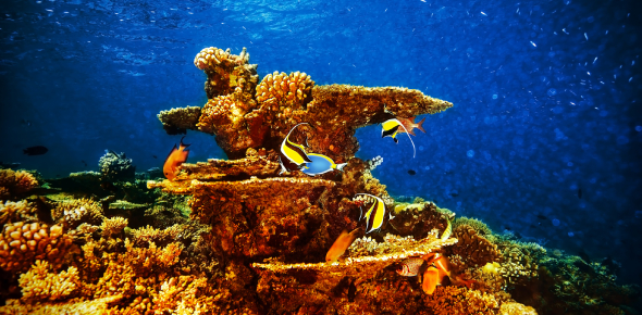 A Quiz About Marine Life