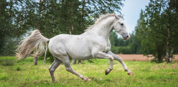 The Summer Of The Beautiful White Horse