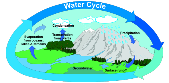 The Water Cycle Quiz!