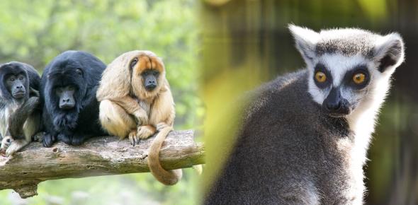Animal Quiz: Interesting Facts!