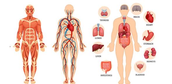 Human Body Quiz For Grade 2