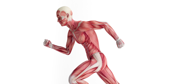 Muscles Exam Quiz: Test Your Knowledge!