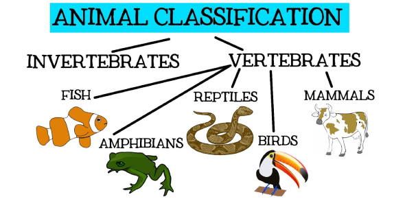 Classifications Of Animal Knowledge Quiz