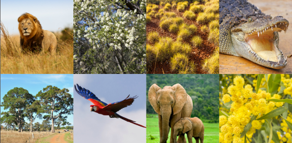 Animals And Plants Interesting Facts! Quiz