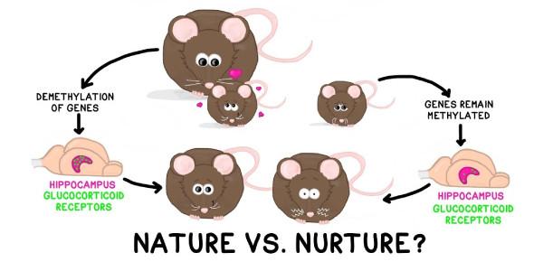 Nature Vs Nurture Quiz