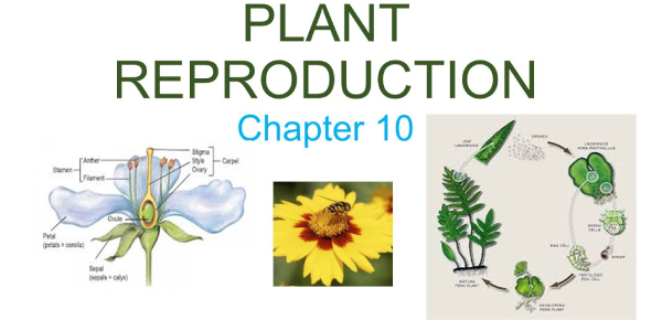 Science Quiz: Plant Reproduction