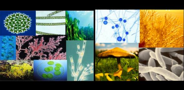A Biology Quiz On Algae & Fungi