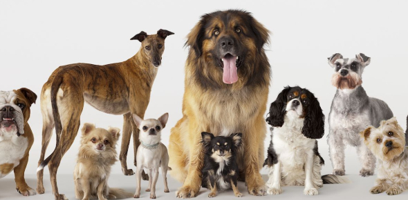 What Kind Of Dog Are You? Personality Quiz