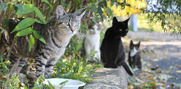 Quiz: Which Neighborhood Cat Are You?
