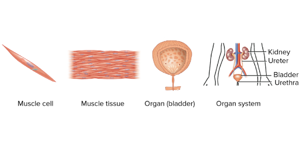 How Well You Know About Tissue? Trivia Quiz